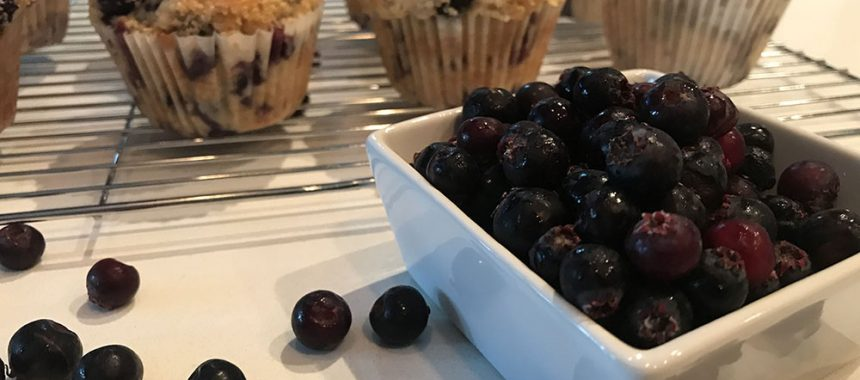 Saskatoon Berry Muffins
